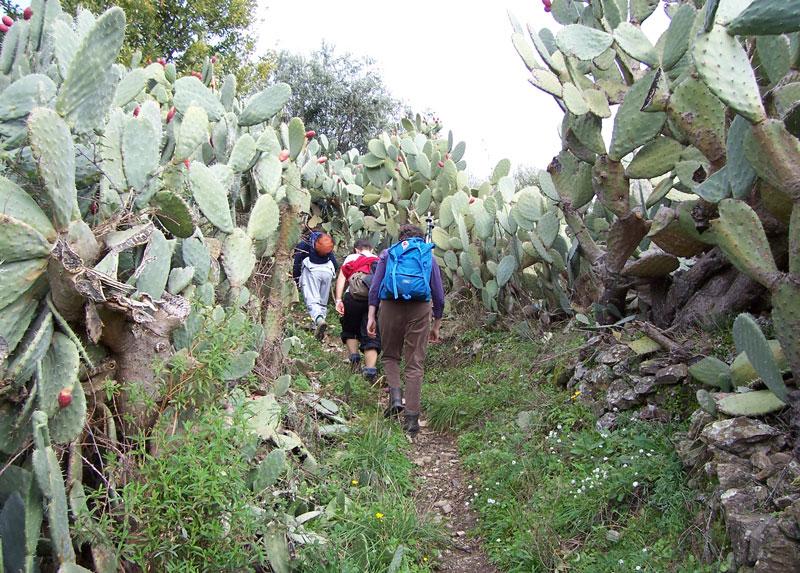 Trekking fichi d'india